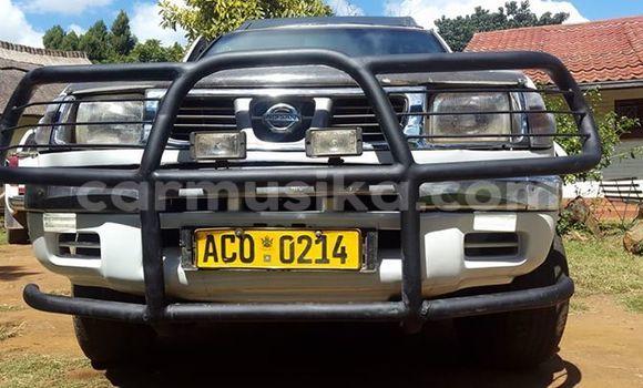 Buy Nissan Hardbody White Car in Alexandra Park in Harare